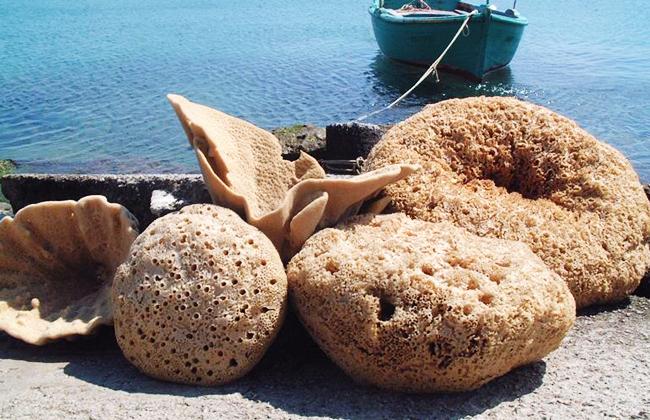 sponges-09.jpg